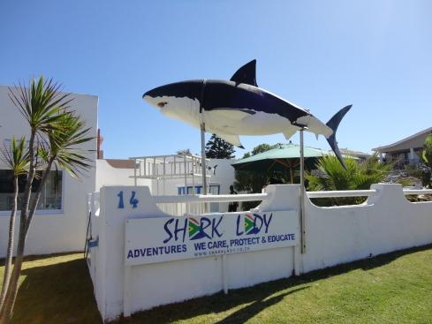 Shark Lady Adventures