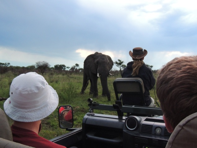 Elephant viewing on private game drive in Sabi Sands