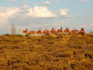 Uluru Camel Trail 2