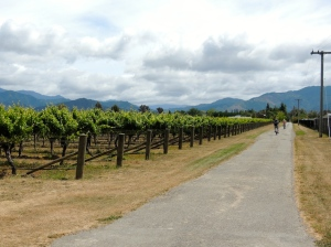 Cycling Marlborough