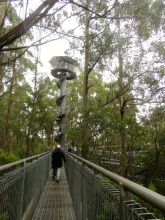 Sky Tower at Otway Fly