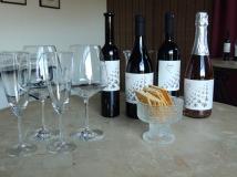 Wine tasting at šunj vina