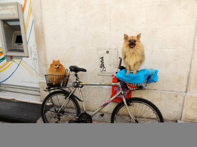 Cute puppies, Split, Croatia