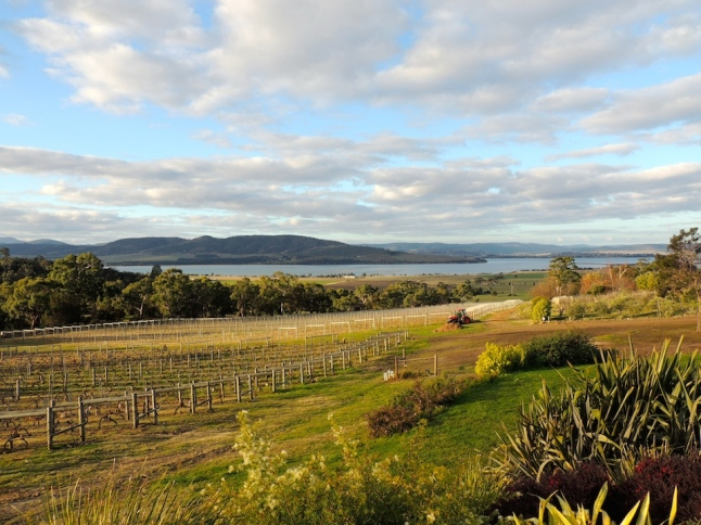 View from Coal Valley Vineyard