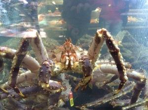 King Crab! Fish Me, Begen Fish Market