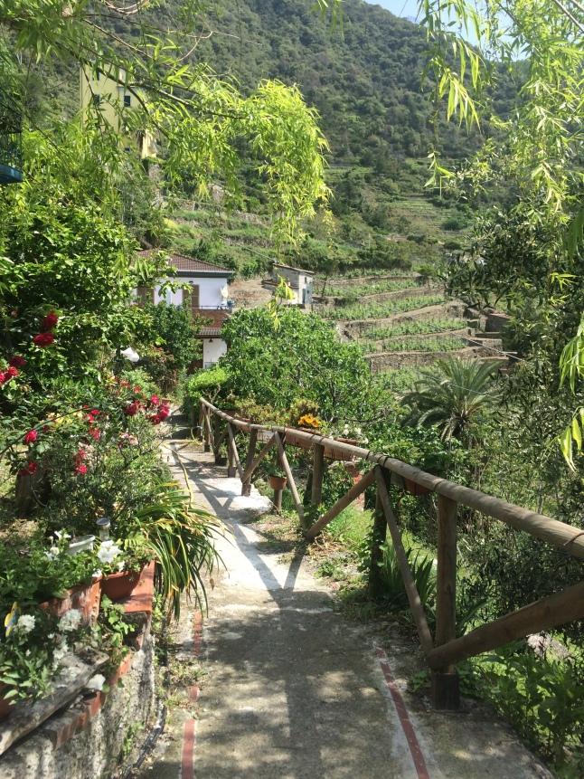 Vineyard in Corniglia, Cinque Terre